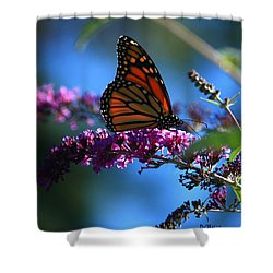 Shower Curtain featuring the photograph Monarch Butterfly by Patrick Witz
