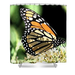Monarch Colors Shower Curtain