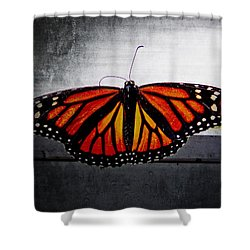 Monarch Shower Curtain by Julia Wilcox