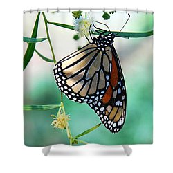 Shower Curtain featuring the photograph Monarch by Tam Ryan