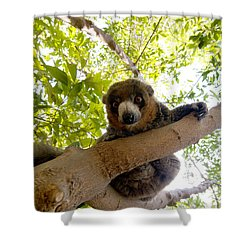 Mongoose Lemur Shower Curtain