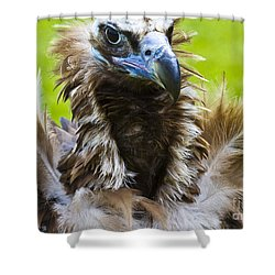 Monk Vulture 4 Shower Curtain