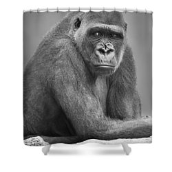 Monkey Shower Curtain by Darren Greenwood