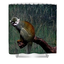 Shower Curtain featuring the photograph Monkey by Maria Urso