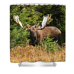 Shower Curtain featuring the photograph Monster In The Hemlocks by Doug Lloyd