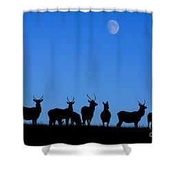 Moonlighting Shower Curtain