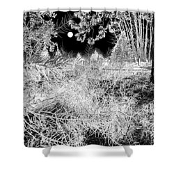Moonlit Frost Shower Curtain by Will Borden