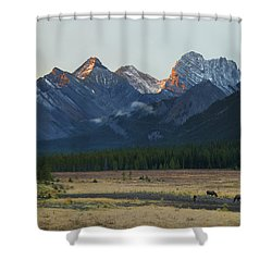 Moose Grazing At Sunset With Mountains Shower Curtain by Philippe Widling