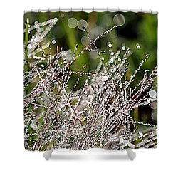 Shower Curtain featuring the photograph Morning Dew by Lauren Radke
