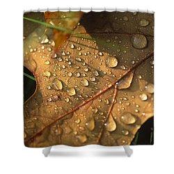 Morning Dew On Oak Leaf Shower Curtain