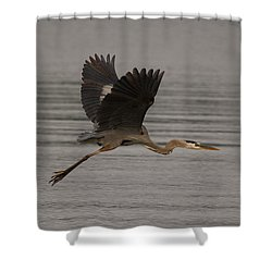Morning Flight Shower Curtain by Eunice Gibb
