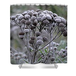 Shower Curtain featuring the photograph Morning Frost by Tiffany Erdman