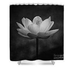 Morning Lotus Shower Curtain by Scott Pellegrin