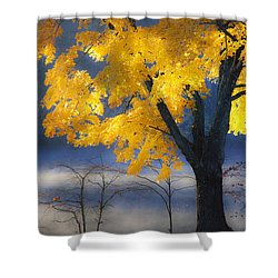Morning Maple Shower Curtain by Rob Travis