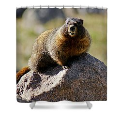 Morning Marmot Shower Curtain by Colleen Coccia