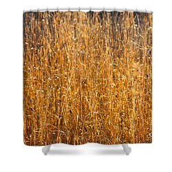 Morning Sunshine On The Marsh Shower Curtain by Carol Groenen