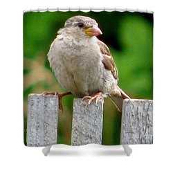 Morning Visitor Shower Curtain by Rory Sagner
