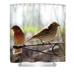 Morning Visitors 2 Shower Curtain by Rory Sagner
