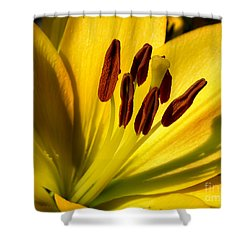Morning Yellow Shower Curtain