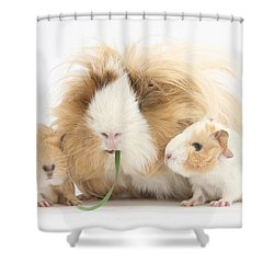 Mother Guinea Pig And Baby Guinea Shower Curtain by Mark Taylor
