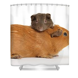 Mother Guinea Pig With Baby Guinea Pig Shower Curtain by Mark Taylor