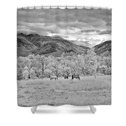 Mountain Grazing Shower Curtain by Joann Vitali