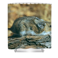 Mouse On A Log Shower Curtain by Photo Researchers, Inc.