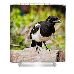 Mr. Magpie Shower Curtain by Cheryl Baxter