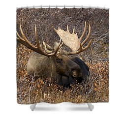 Shower Curtain featuring the photograph Much Needed Rest by Doug Lloyd