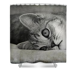 Muffin Shower Curtain by Claudia Moeckel