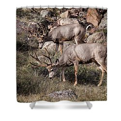 Mule Deer Bucks Shower Curtain