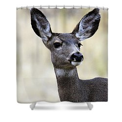 Shower Curtain featuring the photograph Mule Deer Doe by Steve McKinzie