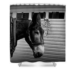 Mule - Tied Up For A While Shower Curtain by Travis Truelove