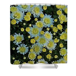 Shower Curtain featuring the photograph Mums by Joseph Yarbrough