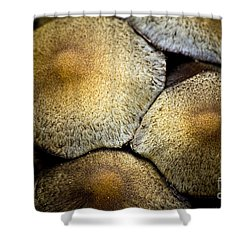 Mushrooms In Summer Shower Curtain