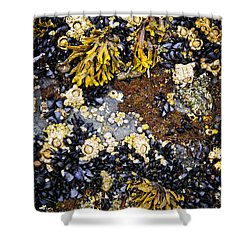 Mussels And Barnacles At Low Tide Shower Curtain by Elena Elisseeva