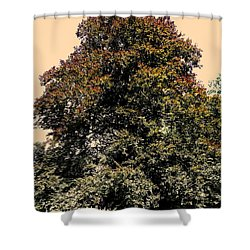 My Friend The Tree Shower Curtain by Juergen Weiss