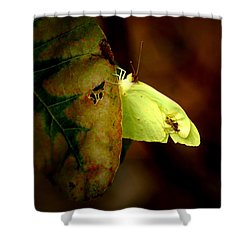 Mystical World Shower Curtain
