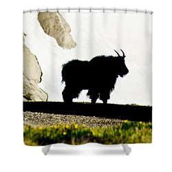 Shower Curtain featuring the photograph Nature's Silhouette by Colleen Coccia