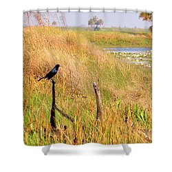 Near And Far Shower Curtain by Jan Amiss Photography