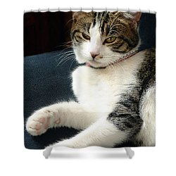 Nellie Shower Curtain by Lisa Phillips