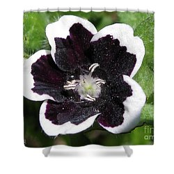 Shower Curtain featuring the photograph Nemophilia Named Penny Black by J McCombie