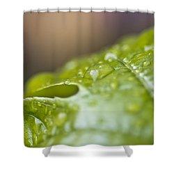 New Beginnings Shower Curtain by Priya Ghose