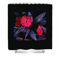New Guinea Impatiens Shower Curtain by Tom Wurl