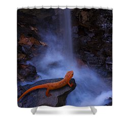 Newt Falls Shower Curtain by Ron Jones