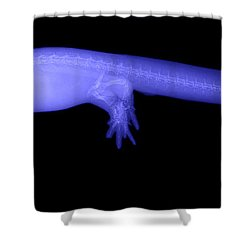 Newt Shower Curtain by Ted Kinsman