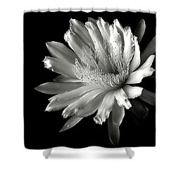Night Blooming Cereus In Black And White Shower Curtain