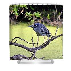 Night-heron Shower Curtain by Al Powell Photography USA