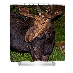 Night Moose 1 Shower Curtain by Lloyd Alexander