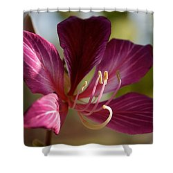 North Park Shower Curtain by Joseph Yarbrough